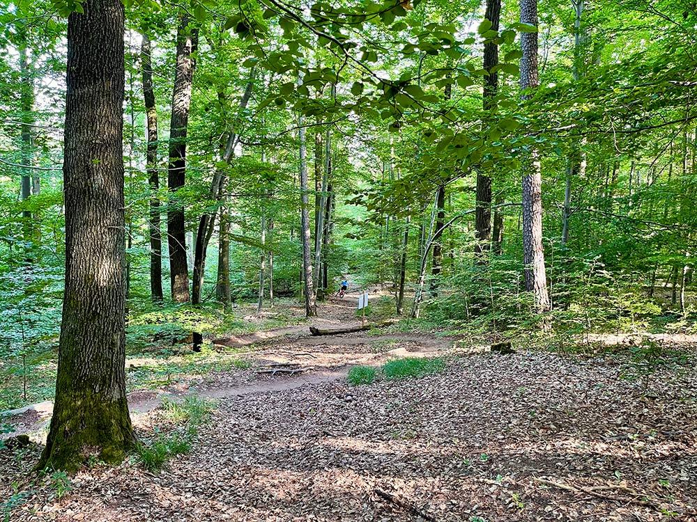 Katzenkopf Trail Kernen